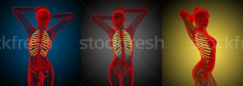 3D médico ilustração humanismo Foto stock © maya2008