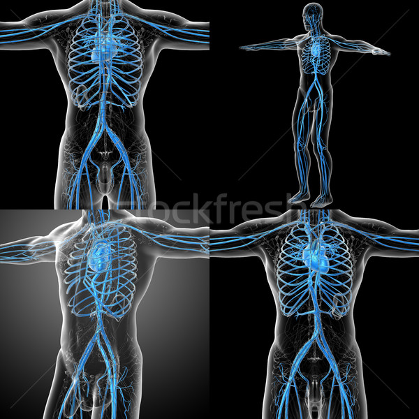 3d rendering medical illustration of the human vascular system  Stock photo © maya2008