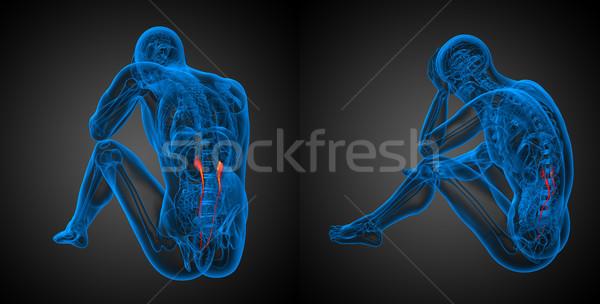 3D レンダリング 実例 ボディ オレンジ ストックフォト © maya2008