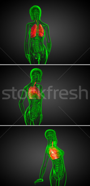 3d rendering  medical illustration of the human respiratory syst Stock photo © maya2008