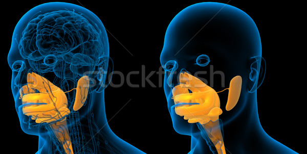 3d rendering medical illustration of the human digestive system Stock photo © maya2008