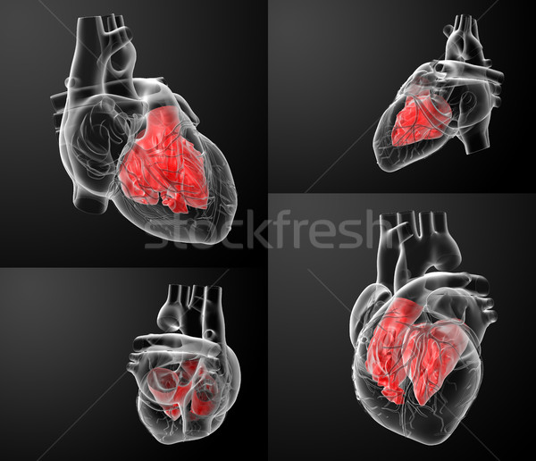 3D rendering of the Heart atrium  Stock photo © maya2008