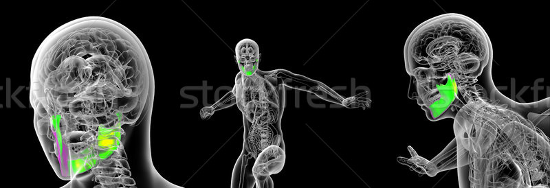3d rendering medical illustration of the human jaw bone Stock photo © maya2008