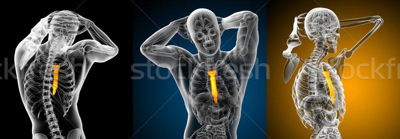 Stok fotoğraf: 3D · tıbbi · örnek · kemik · insan