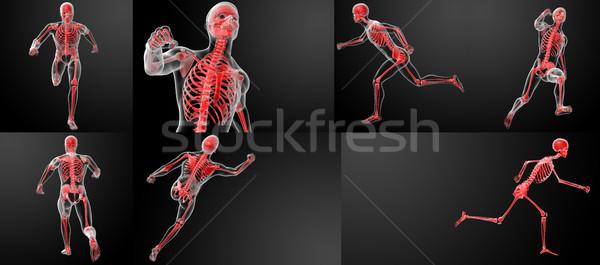 3d render corrida anatomia humana homem medicina ciência Foto stock © maya2008