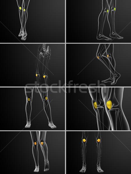 3d rendering medical illustration of the patella bone Stock photo © maya2008