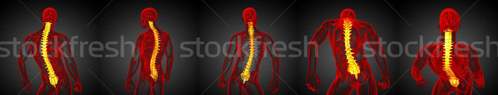 3d rendering medical illustration of the human spine Stock photo © maya2008