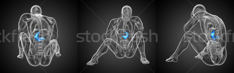 3d rendering medical illustration of the stomach  Stock photo © maya2008