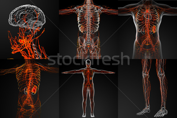 3d rendering of the lymphatic system Stock photo © maya2008