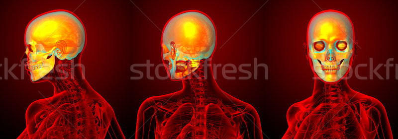 3d rendering medical illustration of the human sull  Stock photo © maya2008