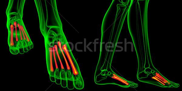 Stockfoto: 3D · medische · illustratie · botten