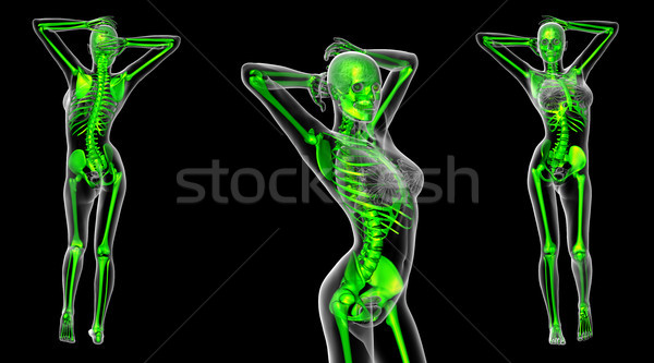 3D médico ilustração esqueleto Foto stock © maya2008