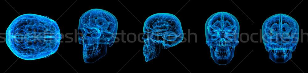 3d render cérebro humano raio x cara médico ciência Foto stock © maya2008