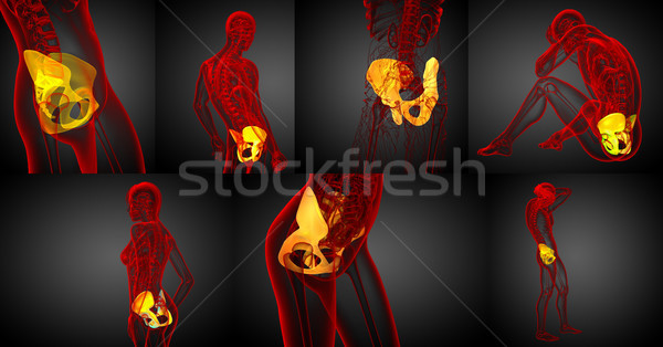 3d rendering medical illustration of the pelvis bone  Stock photo © maya2008