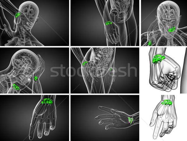 3D レンダリング 実例 人間 骨 ストックフォト © maya2008
