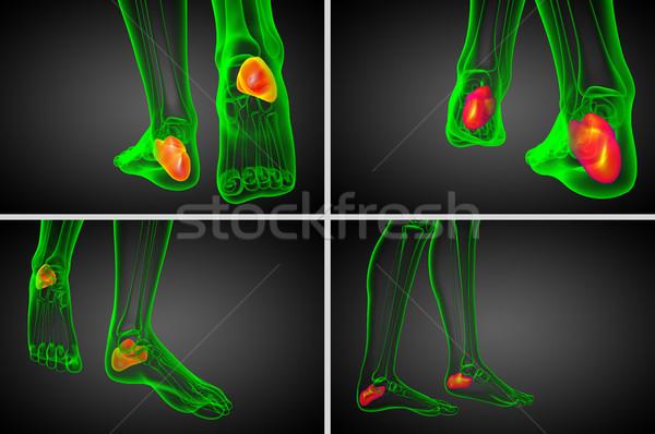 Foto stock: 3D · médico · ilustração · osso · saúde