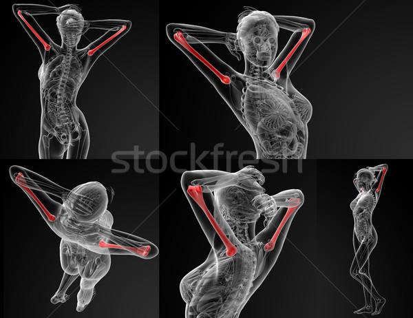 3D レンダリング 実例 骨 医療 健康 ストックフォト © maya2008