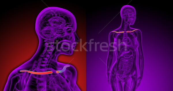 3d rendering medical illustration of the clavicle bone Stock photo © maya2008