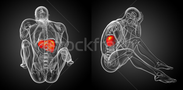Stok fotoğraf: 3D · tıbbi · örnek · karaciğer