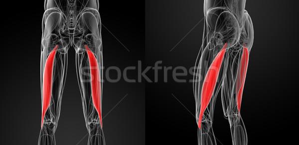 Tıbbi örnek pazı vücut sağlık bilim Stok fotoğraf © maya2008