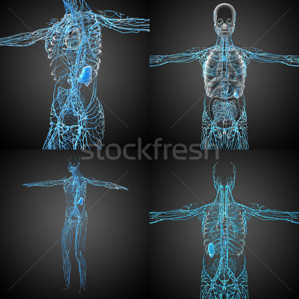 3d rendering medical illustration of the lymphatic system  Stock photo © maya2008