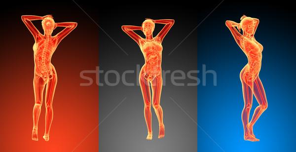 3D renderelt kép illusztráció női anatómia emberi Stock fotó © maya2008