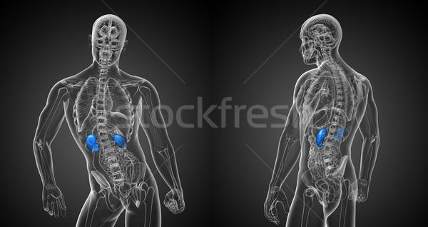 3D médico ilustração Foto stock © maya2008