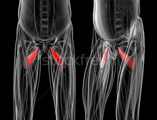 Tıbbi örnek sağlık cilt beyaz grafik Stok fotoğraf © maya2008