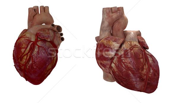 3D レンダリング 医療 実例 人間 中心 ストックフォト © maya2008