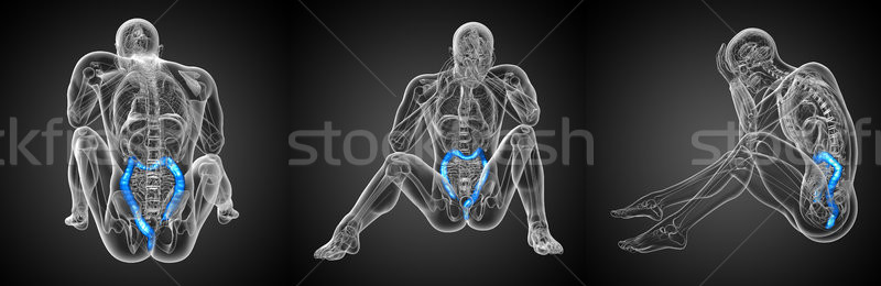 3d rendering of human digestive system large intestine Stock photo © maya2008