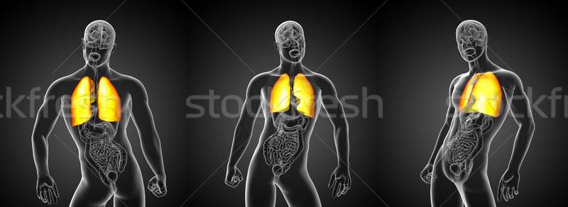 3D renderelt kép illusztráció tüdő Stock fotó © maya2008