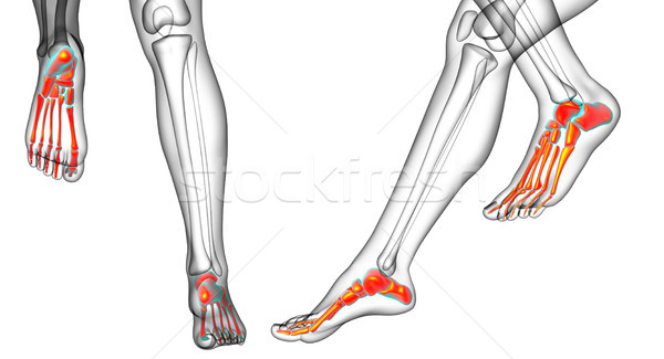 3d rendering medical illustration of the feet bone  Stock photo © maya2008