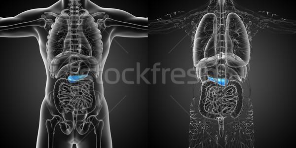 3D renderelt kép orvosi illusztráció férfi test Stock fotó © maya2008