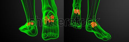 Stock photo: 3d rendering medical illustration of the midfoot bone