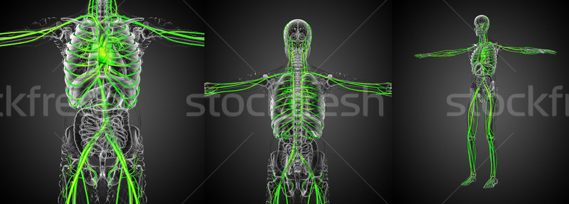 3d rendering medical illustration of the vascular system Stock photo © maya2008