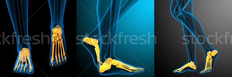 Stockfoto: 3D · medische · illustratie · voet · bot