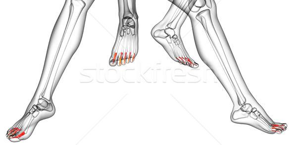3D renderelt kép orvosi illusztráció láb Stock fotó © maya2008