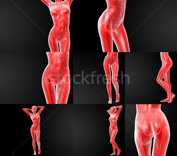 3D ilustração anatomia humana médico ciência Foto stock © maya2008