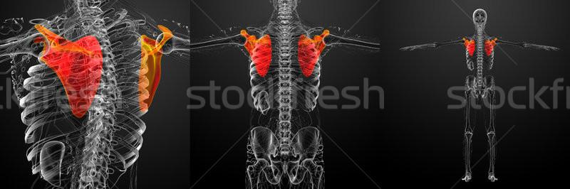 Stock fotó: 3D · renderelt · kép · orvosi · illusztráció · csont
