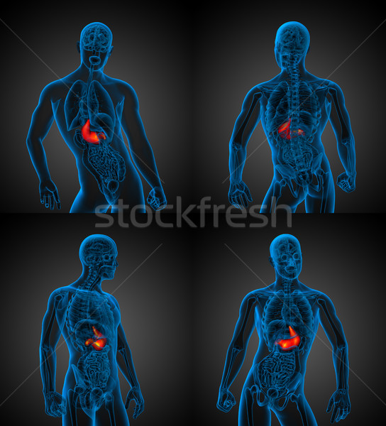 3d rendering medical illustration of the human stomach  Stock photo © maya2008
