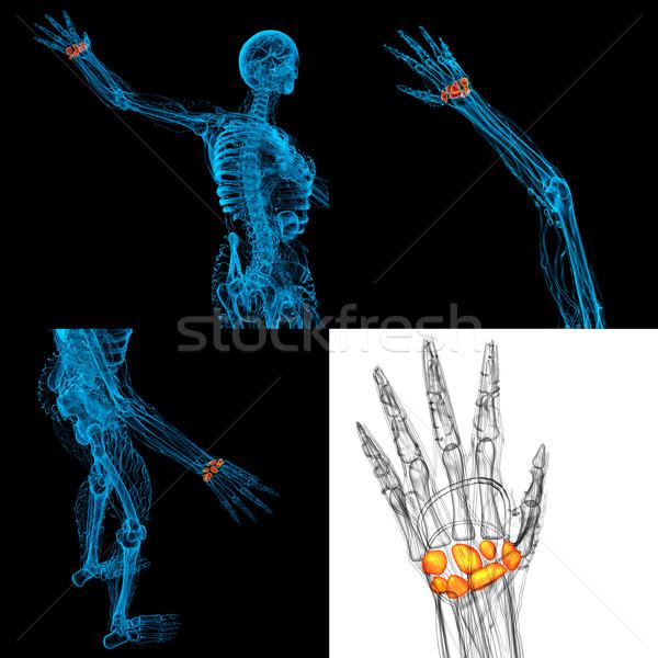 3D illustrazione umani ossa Foto d'archivio © maya2008