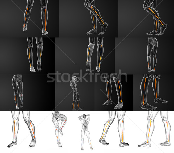 3D illustration osseuse Photo stock © maya2008