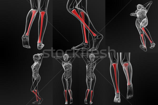 3d rendering illustration of the tibia bone Stock photo © maya2008