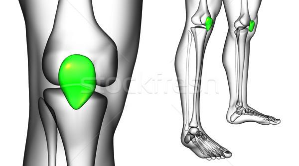 3D renderelt kép orvosi illusztráció csont Stock fotó © maya2008
