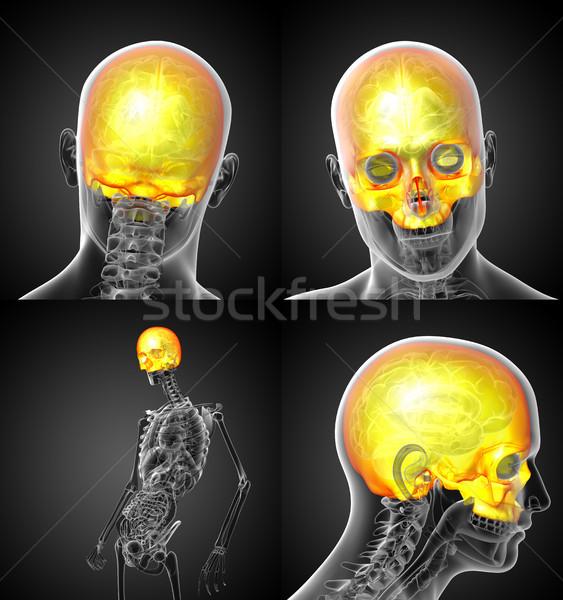 3d rendering medical illustration of the upper skull  Stock photo © maya2008