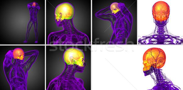 3D レンダリング 医療 実例 頭蓋骨 ストックフォト © maya2008