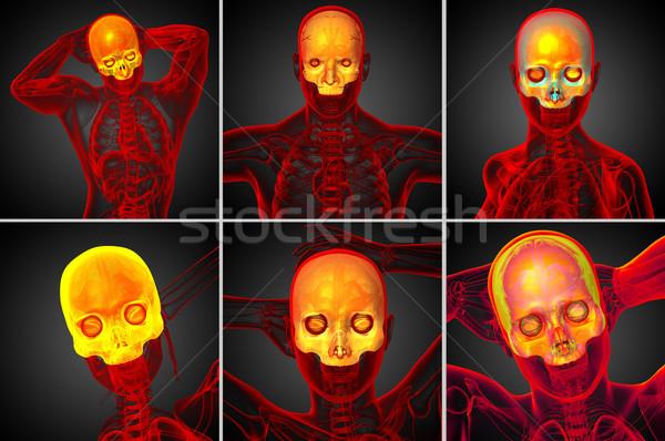 3D medici illustrazione cranio Foto d'archivio © maya2008