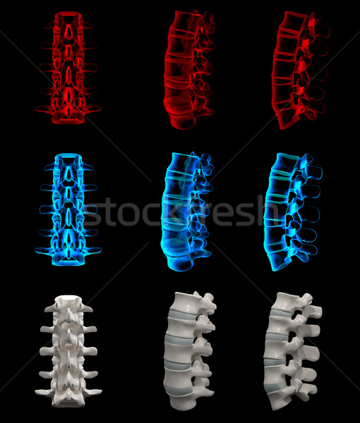 3d rendered illustration of the lumbar Stock photo © maya2008