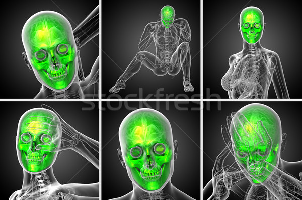 Stock photo: 3d rendering  medical illustration of the skull