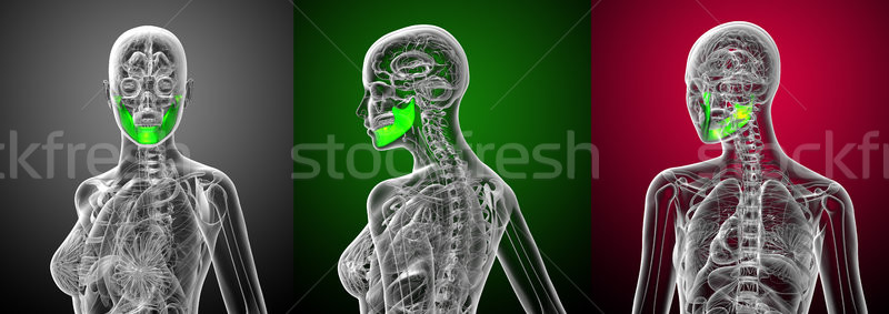 3d rendering medical illustration of the jaw bone Stock photo © maya2008
